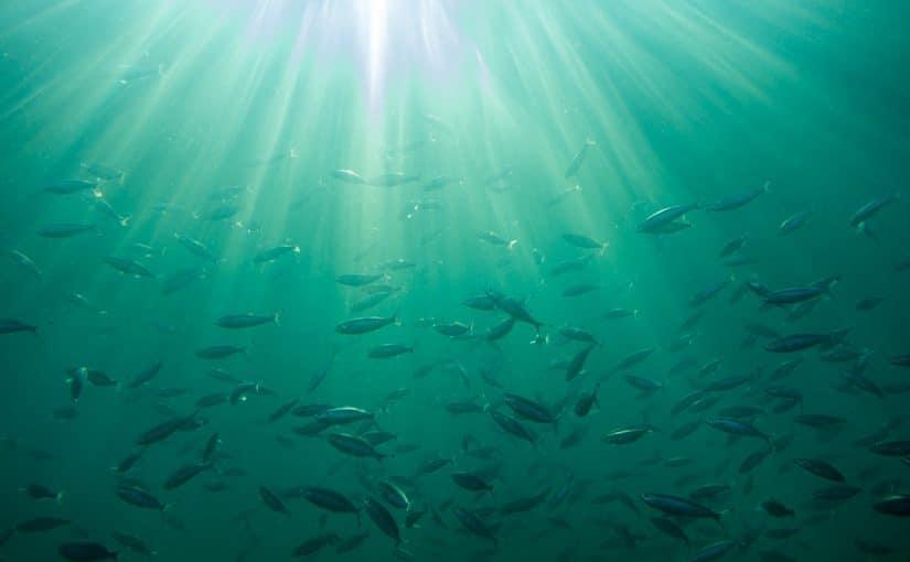 Circular Economy Fish